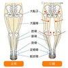 O脚、X脚の改善なら足利市のあしかが整骨院の画像