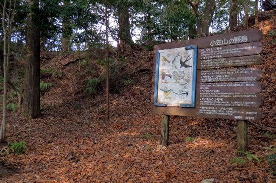 【写11】小笠山砦