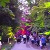 下鴨神社 糺の森の光の祭の画像