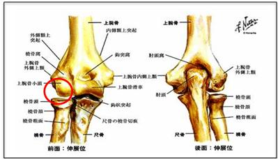【図解でわかる】肘を動かすと痛い! 変形性肘関節症の症状・原因・治療方法 | 医師監修 ZukaiMedica