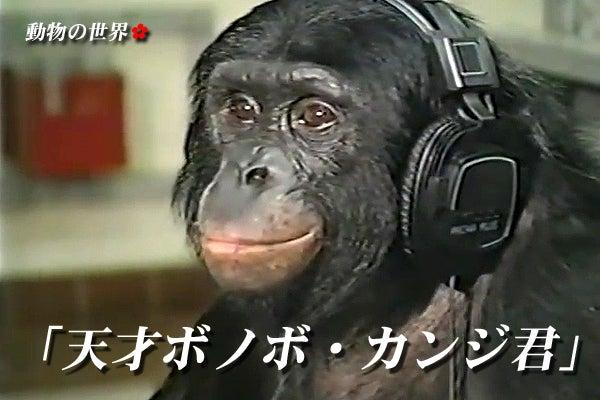 カンジ ボノボ