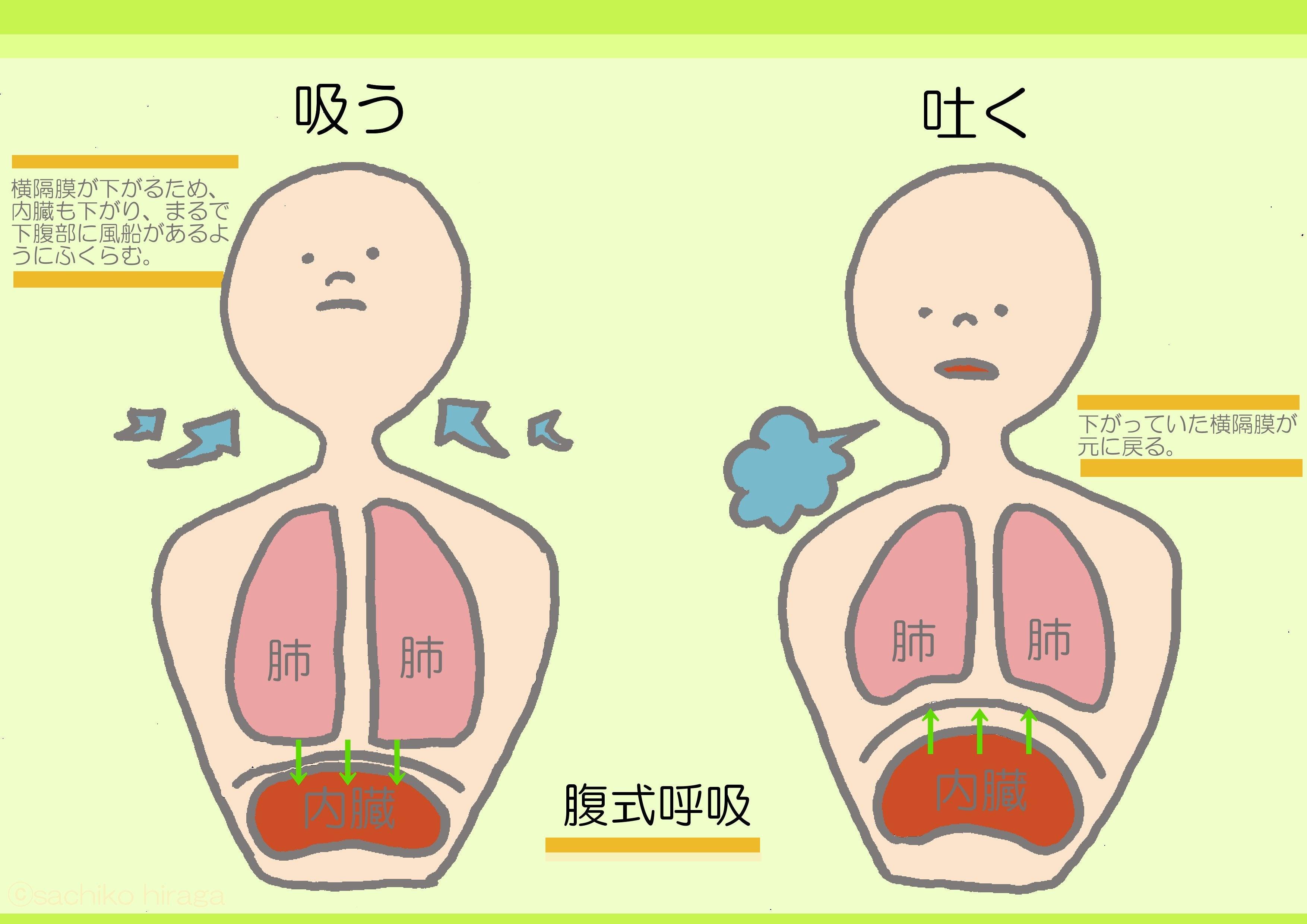 呼吸 と は 腹 式