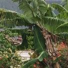 ハワイで品切れ続出の卵、卵かけご飯♡の記事より
