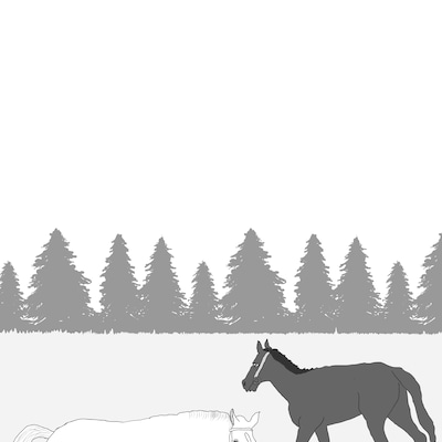 全く別の話 a horse of a different color 違う色の馬の記事に添付されている画像