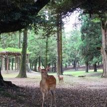 夏の記憶、奈良春日の…