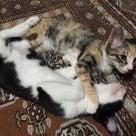 税理士さんも猫好きでした(^_^)の記事より