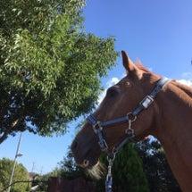 秋の乗馬キャンペーン