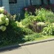 北海道の花スポットを…