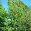 秋分の樹木 ~ヤマナ…