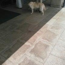 盲導犬セロリ&ピラリ…