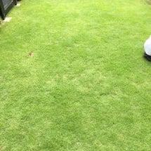 9/11の芝生
