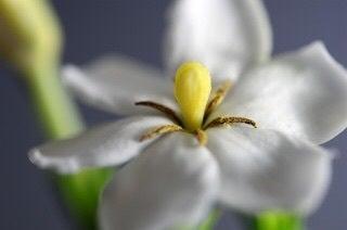干梔子(くちなし)は天然の黄色に色付けできます。の記事より