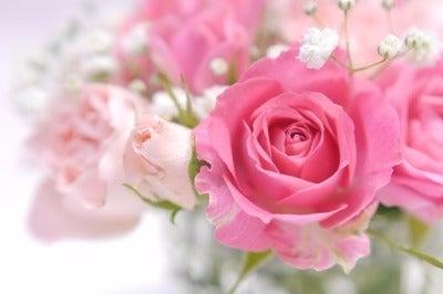 優しい色のバラ