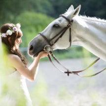 馬とウェディング