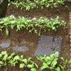 雨の庭の画像