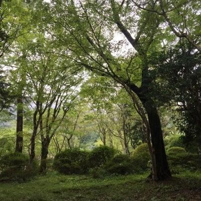 岡田美術館の記事に添付されている画像