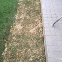 9/17の芝生