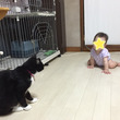 ネコと子供が頑張って…