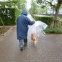 ビーンの雨散歩風景♪
