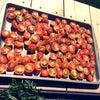 サンドライドトマト作りの画像