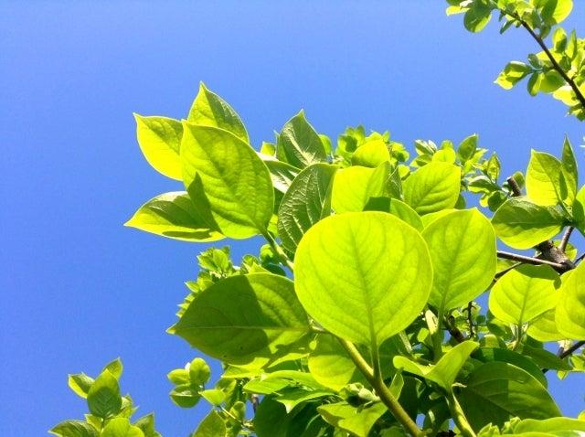 新緑 やる気 気力 元気