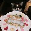 チワワ「カレンちゃん」のBirthdayケーキの画像
