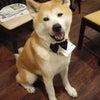 オープン記念日&秋田犬はやちゃん13歳のBirthdayの画像