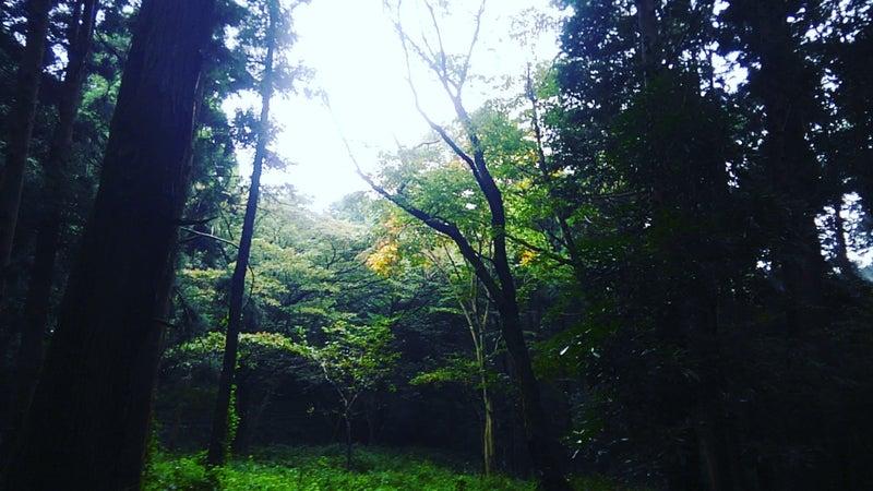 泉の森大和