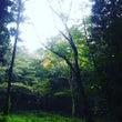 近くの森いろいろ〈相…