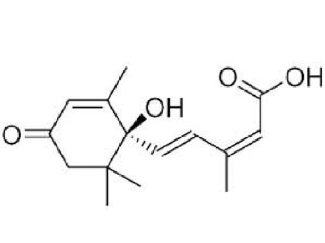 お客様から質問1 アブシジン酸とは 発芽玄米酵素ごはん | genmai ...