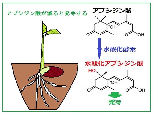 お客様から質問 2 発芽玄米を乾燥していますか | genmai-kousoのブログ