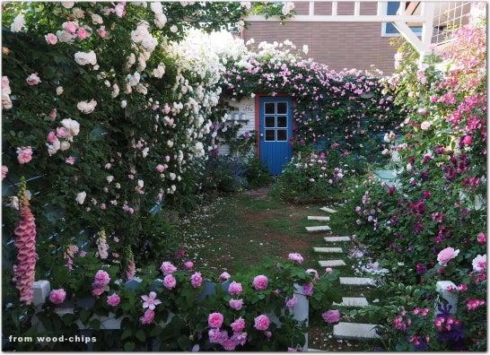 バラの庭写真 ウッドチップス