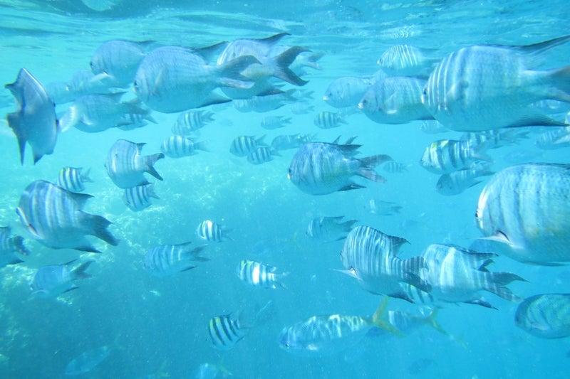 ReefWorld1
