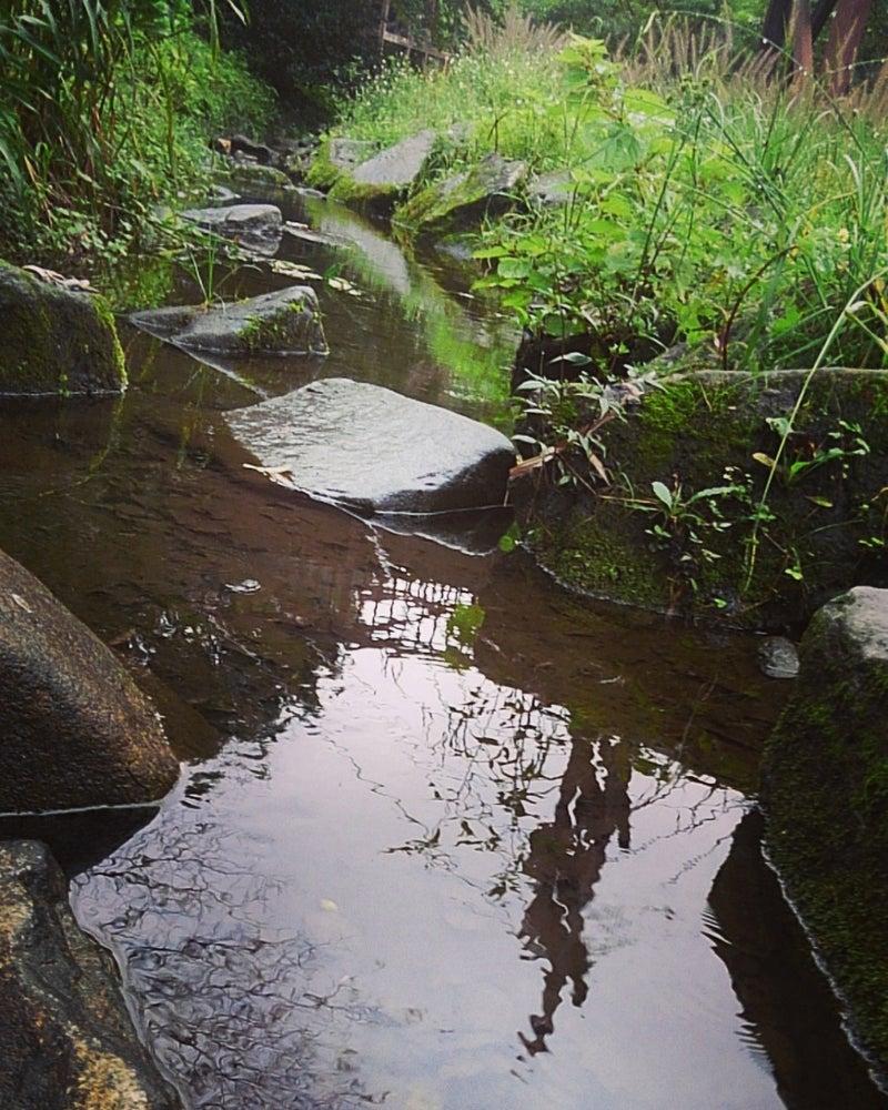 大和泉の森アメンボ