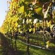 ドイツのワイン産地の…