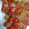 おっきなブドウにびっくり!の画像