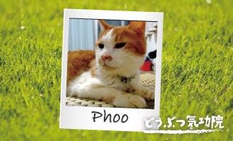 気功 動物<br />ペット どうぶつ ネコ 猫 腫瘍 闘病 体験談 治療