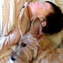 老犬介護と不妊症