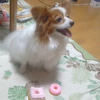 ☆マロンの誕生日の画像