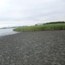 東京湾奥の干潟の土壌