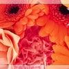 長野に行ってきました~◆サロンのお仕事の画像