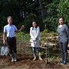 無花果(イチジク)の木を植えましたの画像
