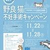 野良猫不妊手術キャンペーン…獣医師 徳田竜之介の画像