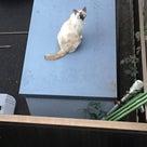 猫から目線の記事より