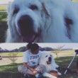 超大型犬の介護