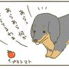 犬の道草の画像