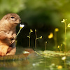 夢や願望を叶えるのは、日々の小さなお世話からの画像