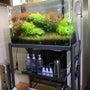 液体肥料でコケ(藻類…