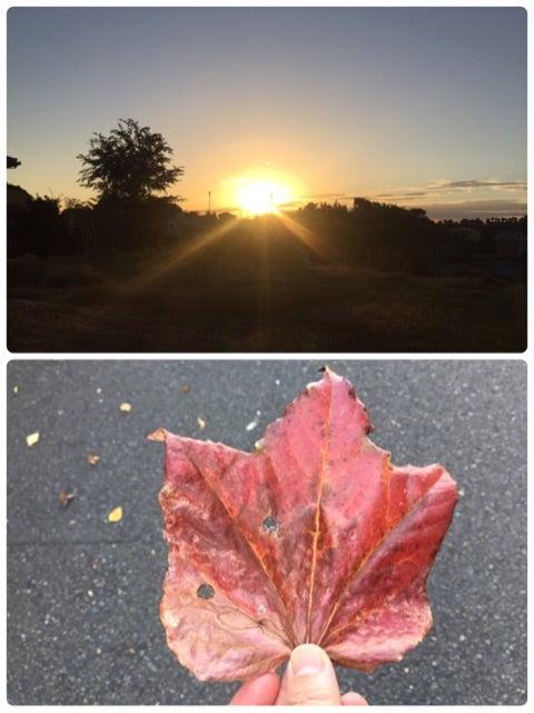秋晴れですねの記事より