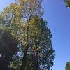 秋の収穫祭散歩  その2の画像